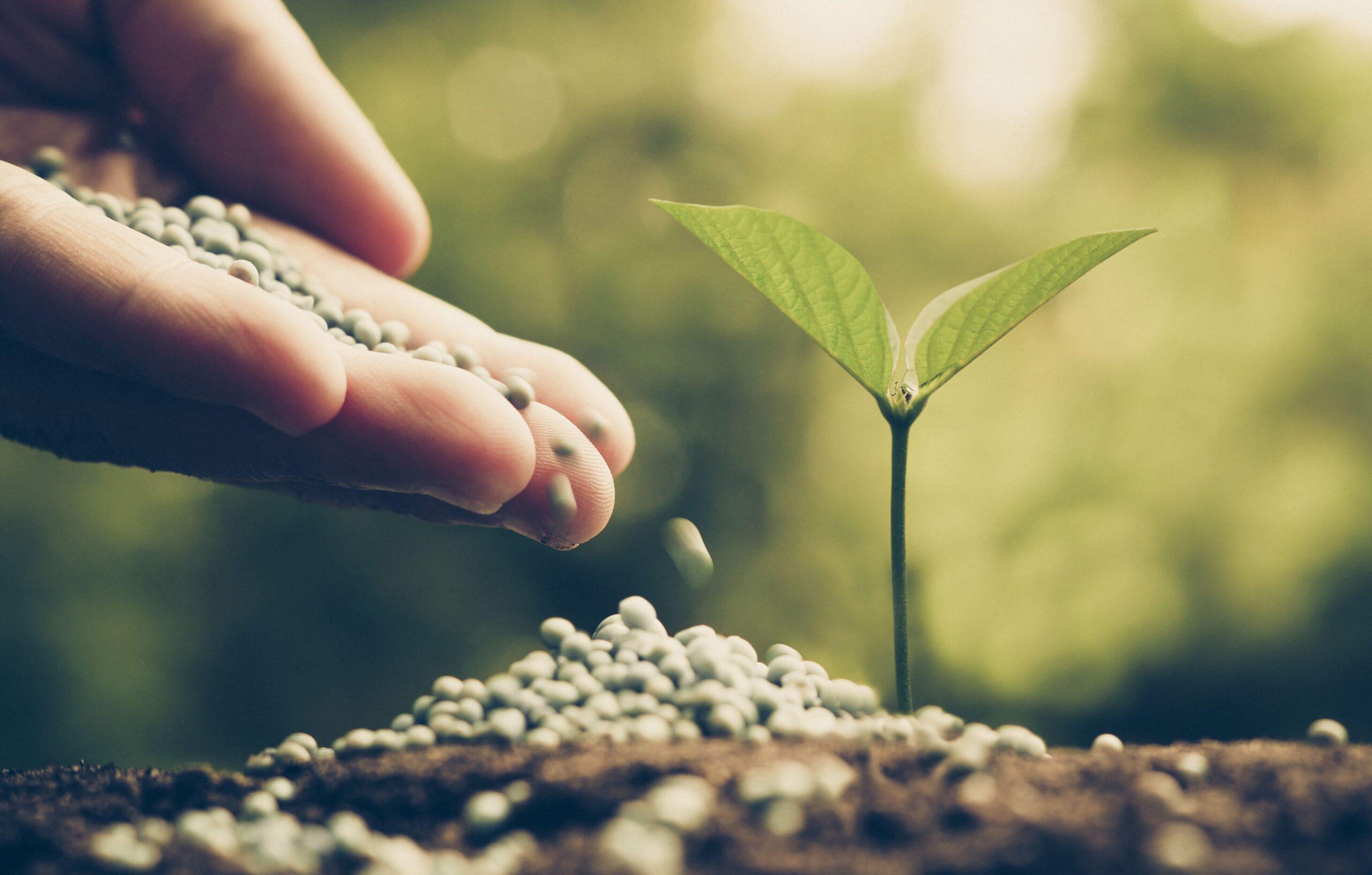 Plant Positive Words